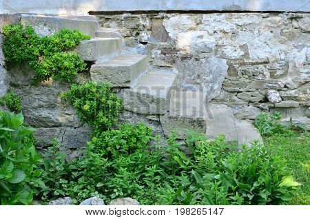 Old stone staircase in rustic style in contrast with fresh green plants on it