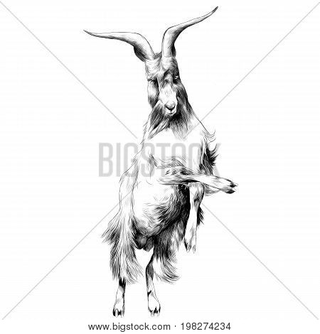 sheep in full growth stands on his hind legs in the jump dance sketch vector graphics black and white drawing
