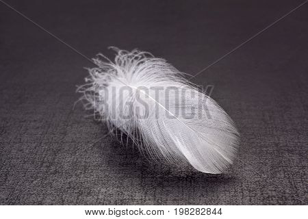 Lightweight feather on dark background vulnerability. Purity concept.