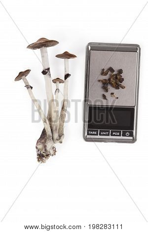 Raw and dried magic mushrooms on digital scale isolated on white background top view. Psychedelic medicine. Natural remedy.