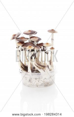 Magic mushroom grow kit isolated on white background. Trippy psychedelic medicine.