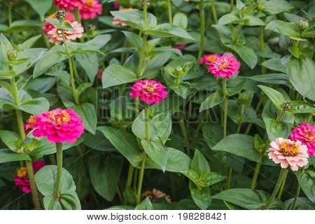 Flowers On A Bed. Red, Orange Flowers In A Garden.