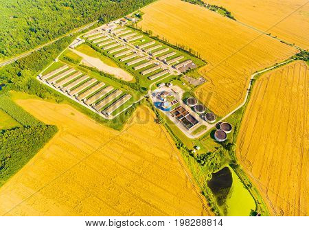 Aerial view to biogas plant from pig farm in ripe wheat fields. Renewable energy from biomass. Summer on countryside. Modern agriculture in European Union.