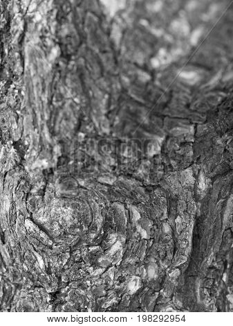 BLACK AND WHITE PHOTO OF CLOSE-UP OF LIVING TREE BARK
