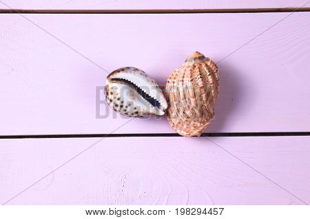 Two sea shells on a pink table.