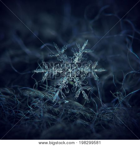 Real snowflake macro photo: large stellar dendrite snow crystal with fine symmetry, big central hexagon and long, elegant arms with side branches. Snowflake glowing on dark blue textured background.