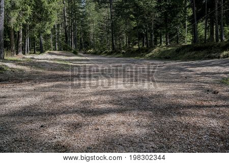 Low Angle View Of A Road Through A Forest
