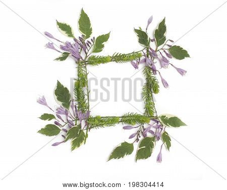 Floral Frame With Purple Hosta Flowers, Green Leaves And Succulents Isolated On White Background. Fl