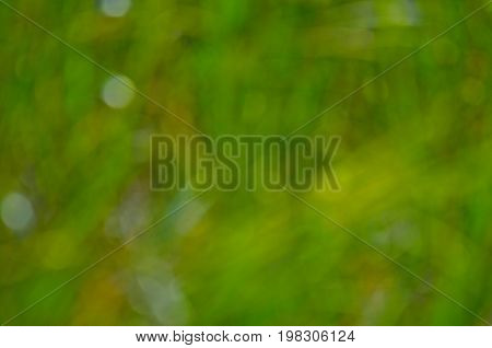 Abstract Blured Out Of Focus Green Background