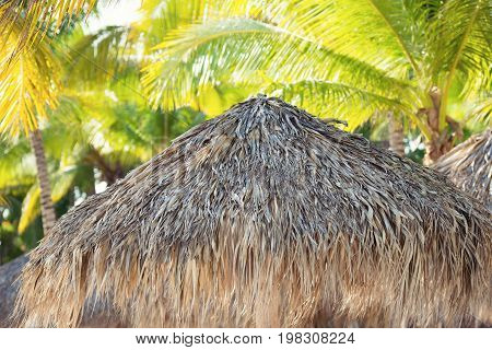 Tropical beach shelter roof and palm tree basking in hot sunshine