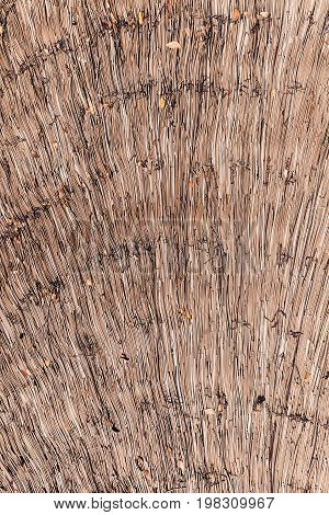 Dry reeds thatch texture background. Tidy straw pattern.
