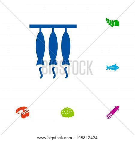 Collection Of Calamary, Sink, Tunny And Other Elements.  Set Of 6 Seafood Icons Set.