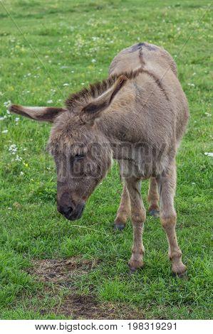 Donkey At The Farm 2