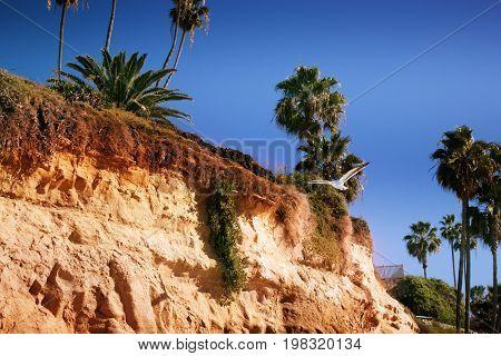 laguna beach california. A perfect blue sky palm trees