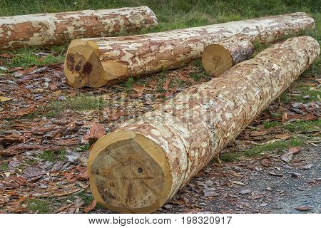 Round Wood Logs For Making Furniture