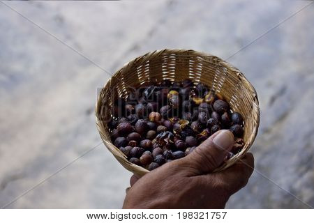 Farm fresh roasted coffee beans from Mexico.