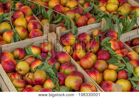 Farmers Market Nectarines In A Wooden Crates