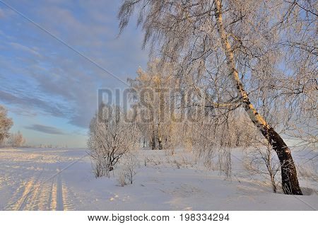 Beautiful winter landscape with birches covered with hoarfrost and road in the golden rays of sunset