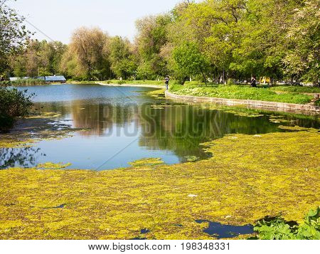 Authentic Landscape Of Polluted Sea Water. Authentic Landscape Polluted Pond In City Park. Sewage Dr