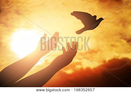 Man praying and free bird enjoying nature on sunset background Human raising hands. Worship christian or freedom concept background. silhouette pigeon flying out of two hand and freedom concept and international day of peace.