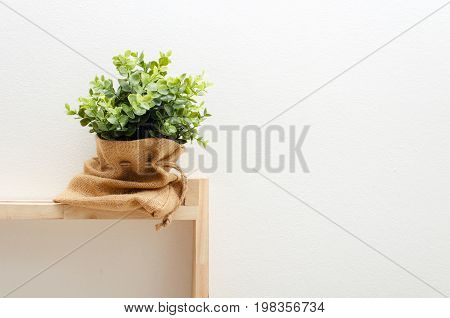 green plant tree leaf in pot or bag sack small decorative on wooden shelves with white wall background minimal houseplant nature concept selective focus copy space vintage color tone