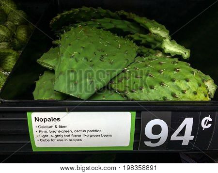 Edible green paddles of Nopales cactus from Arizona desert