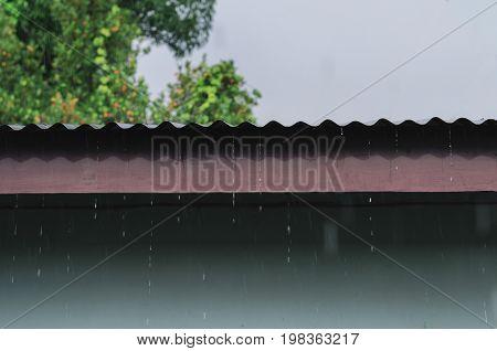 rain on roof of wooden house rainy season and sunshine