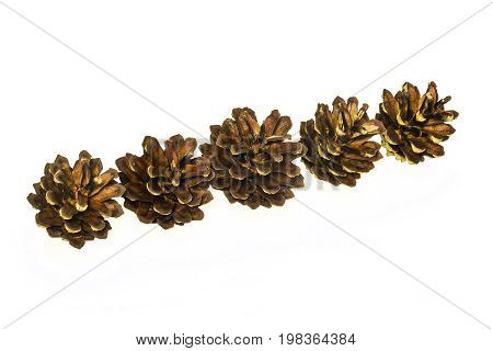 Several pine cones lie on a light surface