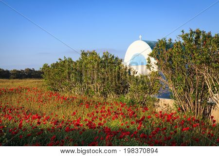 Poppies field with small greek church in Kos Island.