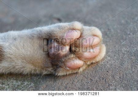 detail of under foot of cat foot