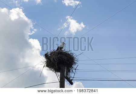 one 1 fledgling Hatchling wild storks sitting in nest against the sky and wires bird
