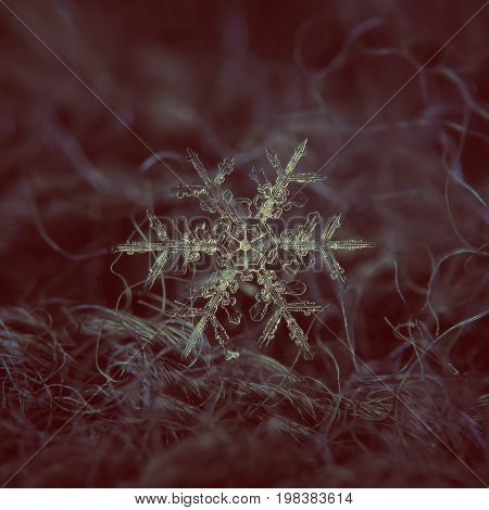 Real snowflake macro photo: large stellar dendrite snow crystal with elegant shape, fine symmetry, massive central hexagon and six long, ornate arms with thin, transparent  side branches.