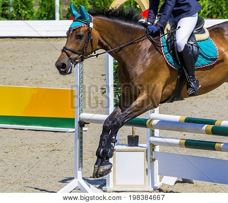 Bay dressage horse and girl performing jump at show jumping competition. Equestrian sport background. Bay horse portrait during dressage competition.