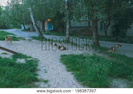 black white stray dog sit on the street at people background