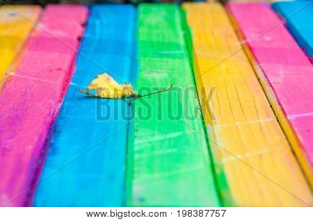 A dry leaf on a bright tabletop consists of rectangular dyed plates of different colors: pink yellow green and blue