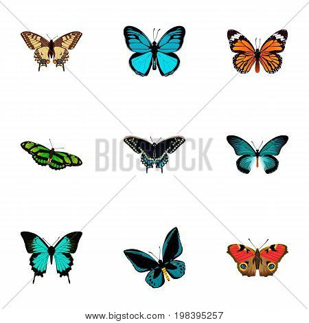 Realistic Green Peacock, Pipevine, Monarch And Other Vector Elements