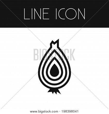 Vegetable Vector Element Can Be Used For Bulb, Spice, Vegetable Design Concept.  Isolated Spice Outline.