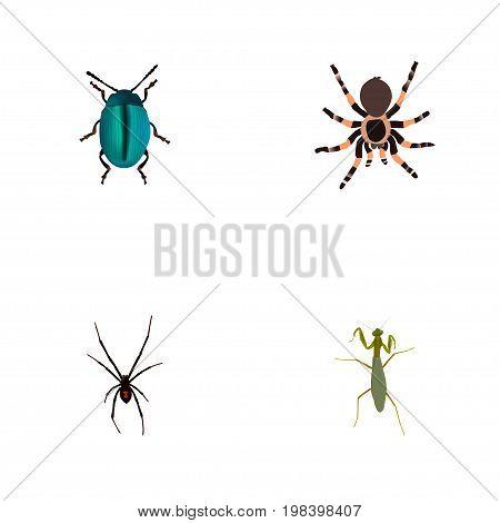 Realistic Bug, Tarantula, Grasshopper And Other Vector Elements