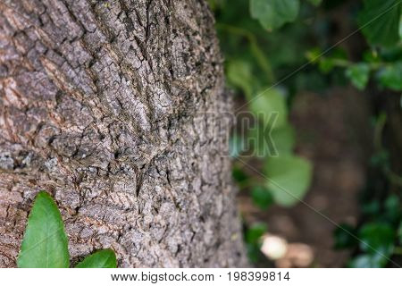 tree trunk close up with plants in front and back