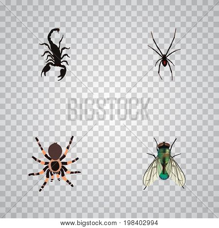 Realistic Housefly, Tarantula, Spinner And Other Vector Elements