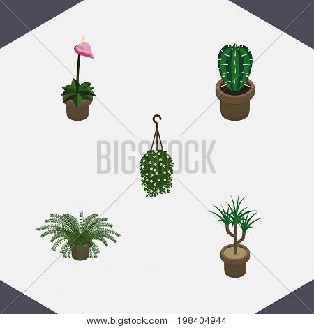 Isometric Plant Set Of Plant, Grower, Peyote And Other Vector Objects