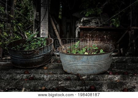Rural photo. Weeds in old metal rusty bowls. Selective focus shallow depth of field low key