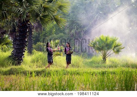 Thai tradition to the morale. In rice fields by two women on field.