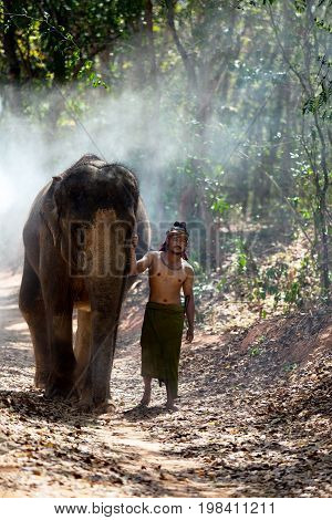 Elephant and mahout walking in wild at Chang village Surin Thailand.
