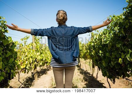 Rear view of vintner standing with arms outstretched in vineyard on a sunny day
