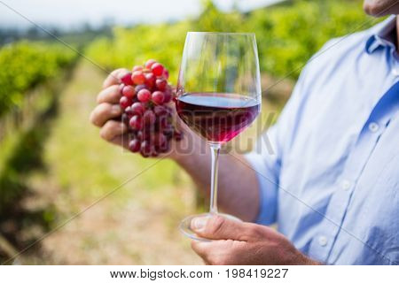 Mid section of vintner holding grapes and glass of wine in vineyard