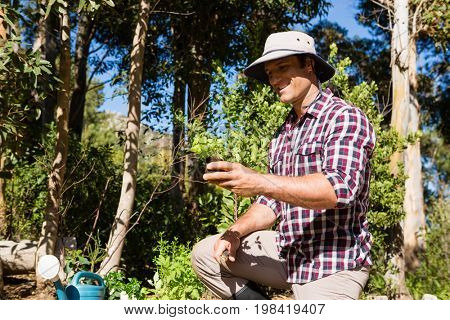 Happy man holding plant in garden on a sunny day