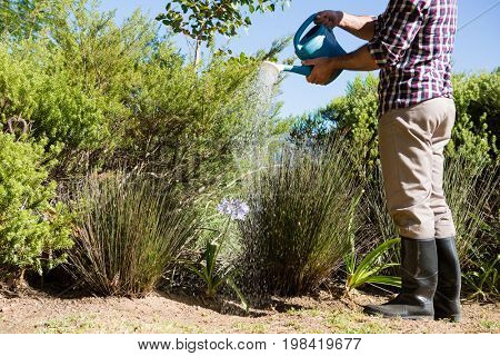 Man watering plants with watering can in garden on a sunny day
