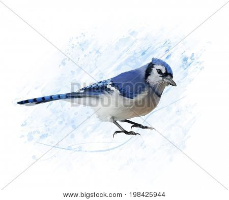 Digital Painting of Blue Jay