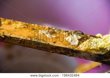 A wooden partition stained with honey and beeswax on which sat a bee